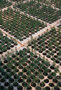 Professional-Vermiculite